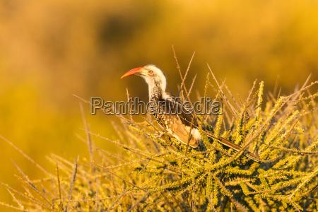 blocknotes animale uccello fauna africa animali
