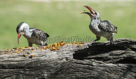 albero alberi animale uccello fauna africa