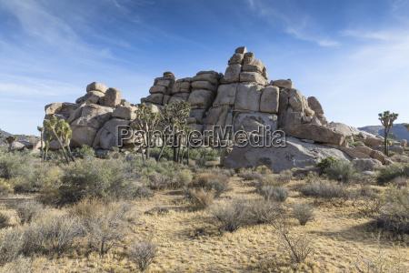 rock in joshua tree national park