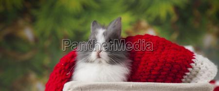 piccolo coniglioconiglio divertente su sfondo di