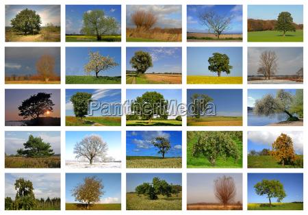 albero alberi inverno albero caduco estate