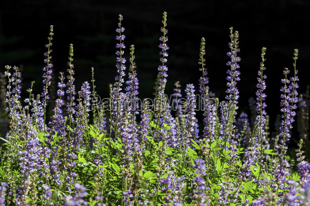 parco nazionale fioritura fiorire giro turistico