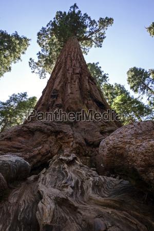 visione dal basso enorme albero alberi