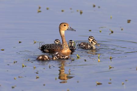 animale uccello fauna parco nazionale asia