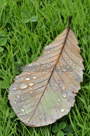 leaf closeup leaves raindrop sights europe