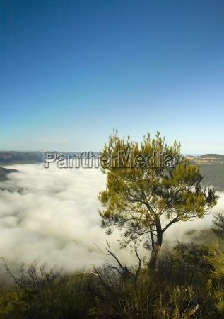blu viaggio viaggiare albero alberi montagne