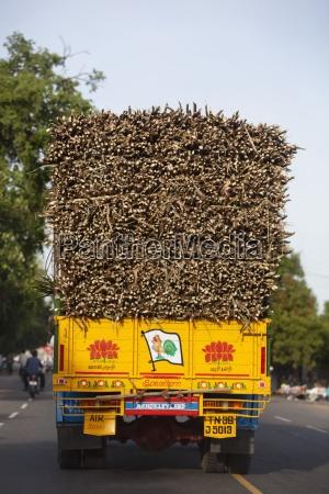 cibo dolce albero alberi motore traffico