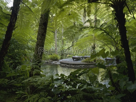 albero alberi acque foglie bali indonesia