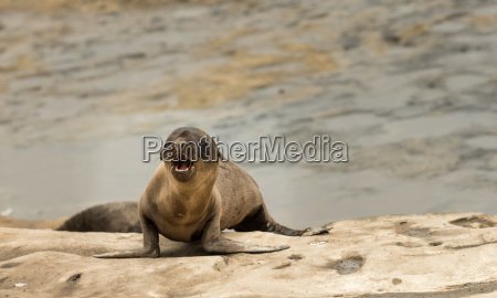 turismo california natura marino giovani