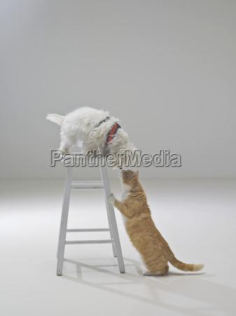 curioso gatto e cane santa barbara