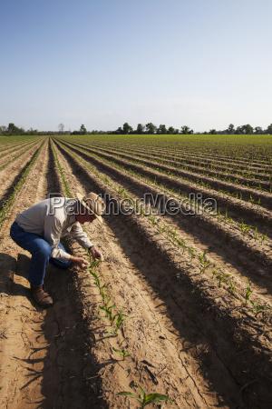 nonecrop consulente ispezionare convenzionale fino semina