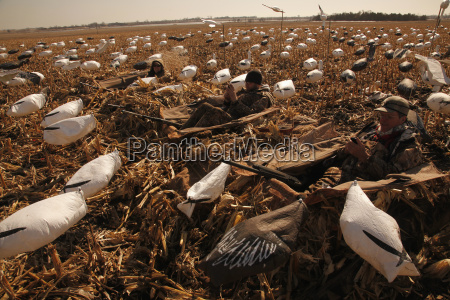 snow, goose, layout, hunters, using, technology - 25540628