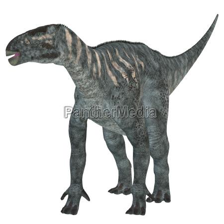 rettile lucertola dinosauro erbivoro