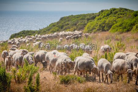 bello bella collina animale mammifero agricoltura