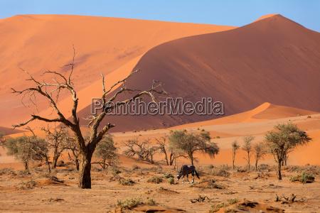 africa namibia paesaggio natura luogo selvaggio