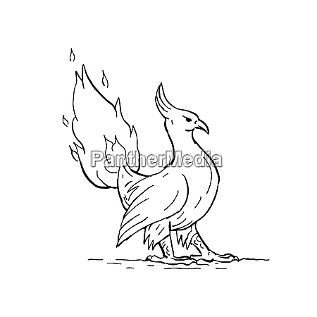 phoenix burning tail drawing