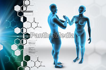 3d corpo femminile e maschile