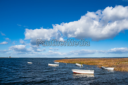 boats and reeds on the baltic