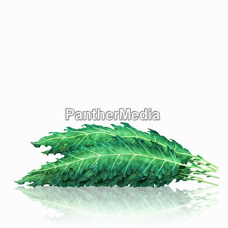 mucchio di foglie di cavolo