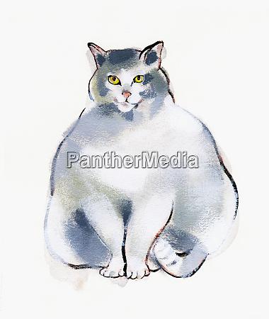 contenuto gatto in sovrappeso