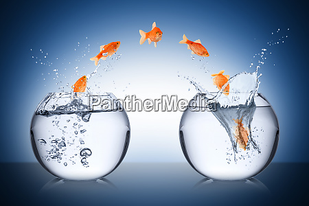 concetto di cambiamento di pesce