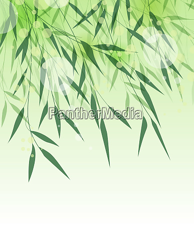 foglia verde bambu