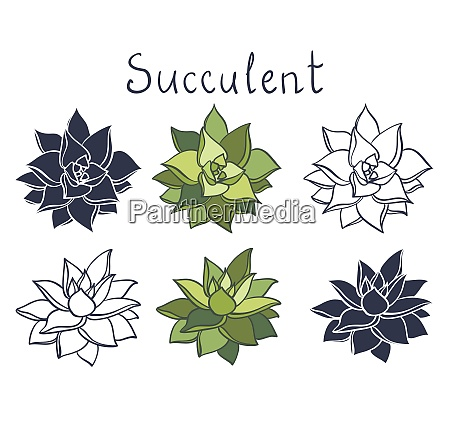 set pianta succulenta nella raccolta del