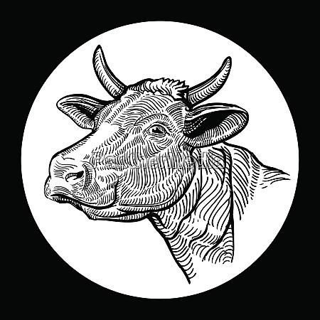cows head hand drawn in a