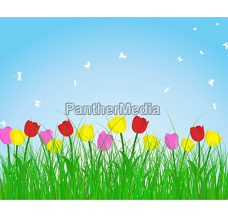 summer meadow background with tulips eps