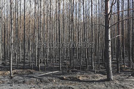 germania brandeburgo treuenbrietzen foresta dopo gli