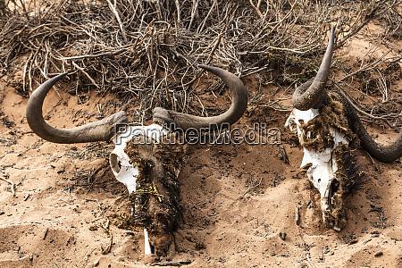 sud africa riserva di caccia privata