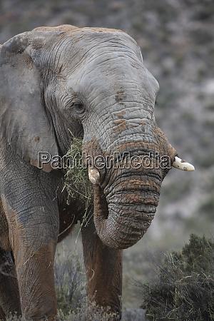sudafrica aquila riserva privata di gioco