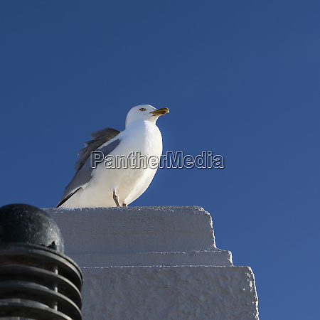 seagull in the sunshine