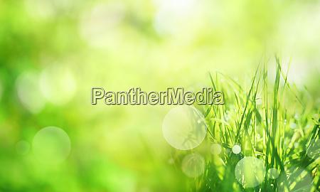 sfondo primaverile verde soleggiato