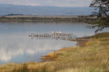 flamingos, and, seagulls, at, the, shore - 26524817