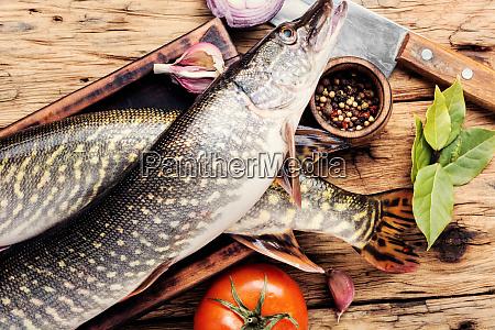 luccio di pesce sul bordo della