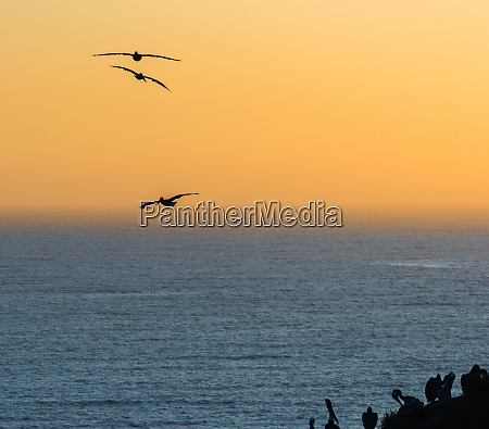 birds flying at dusk over the