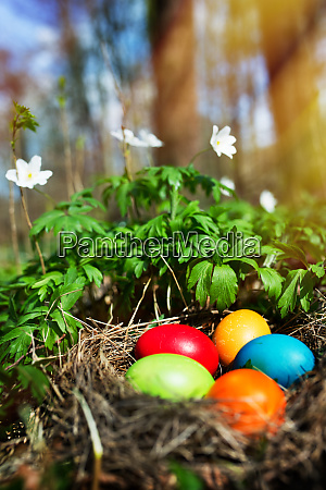 easter eggs in a forest scenery