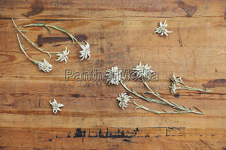 edelweiss su legno