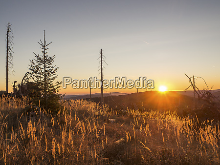 germany bavaria bavarian forest sunrise at