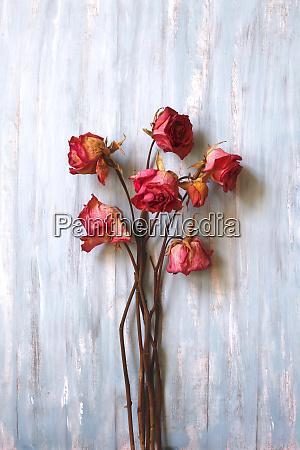 natura morta rose secche su legno