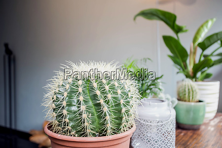 various types of cactus and green