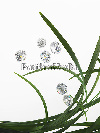 foglie di cinturino verde in gruppo