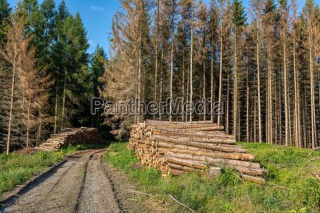 tronchi di legno raccolto nella foresta
