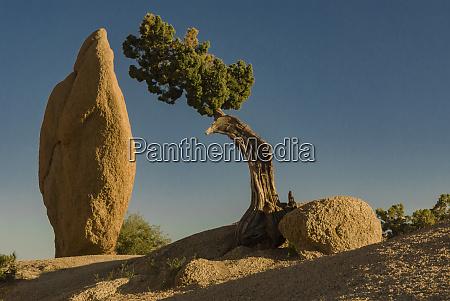 usa california joshua tree national park