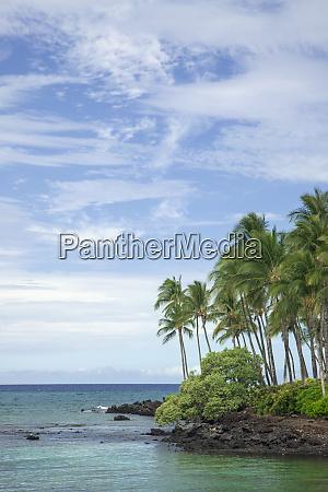 usa hawaii big island shoreline landscape