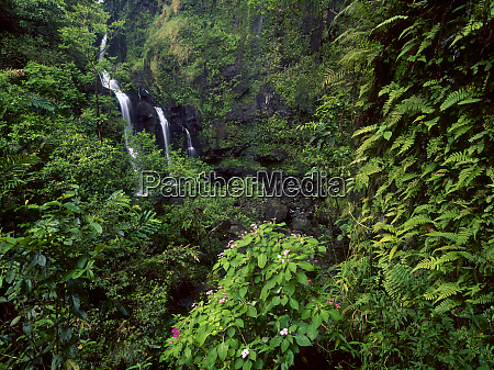 waimoku falls surrounded by verdant forest