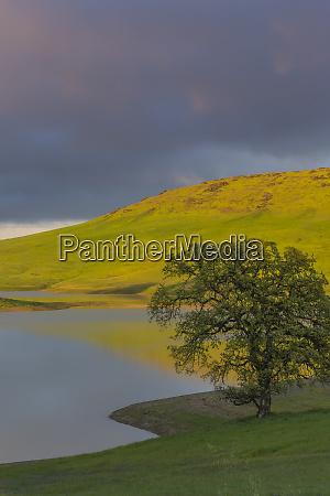 usa california black butte lake oak