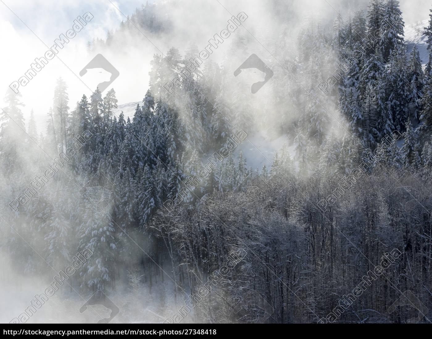 alberi, nella, nebbia, con, la, luce - 27348418