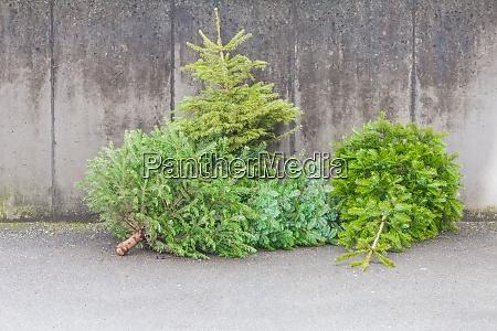tradizionali alberi di natale verdi abeti